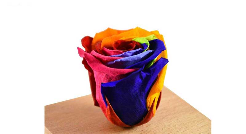 what is eternal rose & how to make preserved rose at home ?