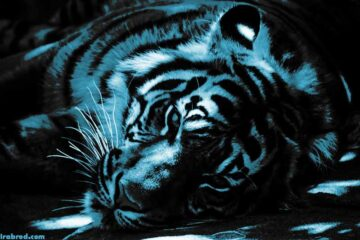 what animal year is 2022 - Top 10 celebrities born in the year of tiger